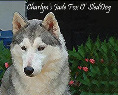 Th Ch. Charlyn's Jade Fox O' Sled Dog
