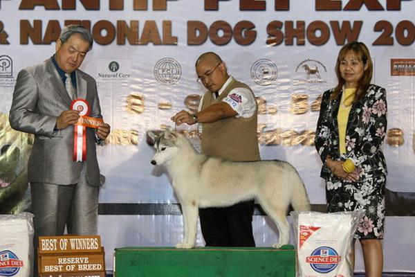 Reserve Best of Breed Sparta's Blooming Cherry